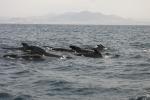 Whale Whatching Tarifa